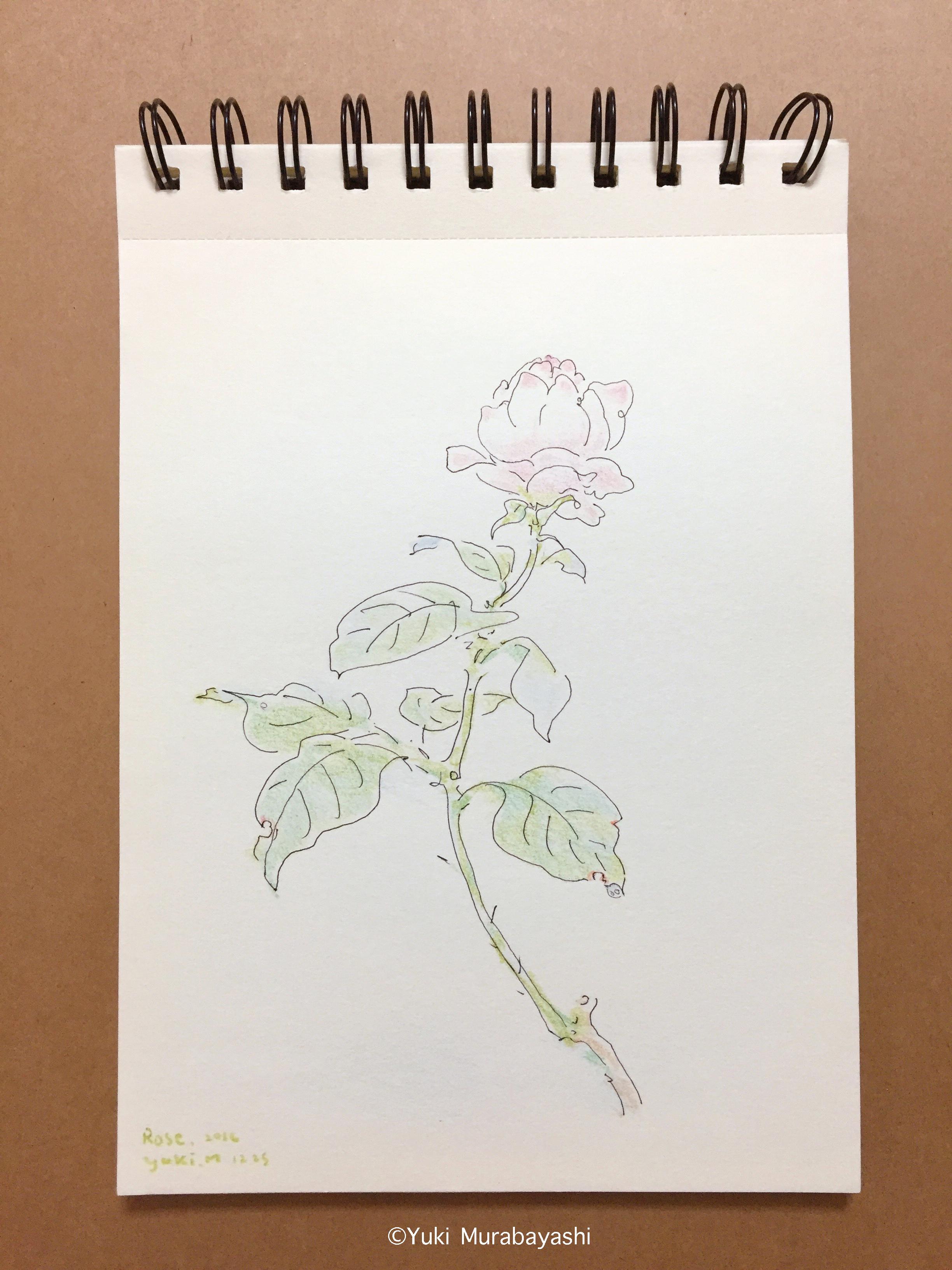 スケッチ2_薔薇