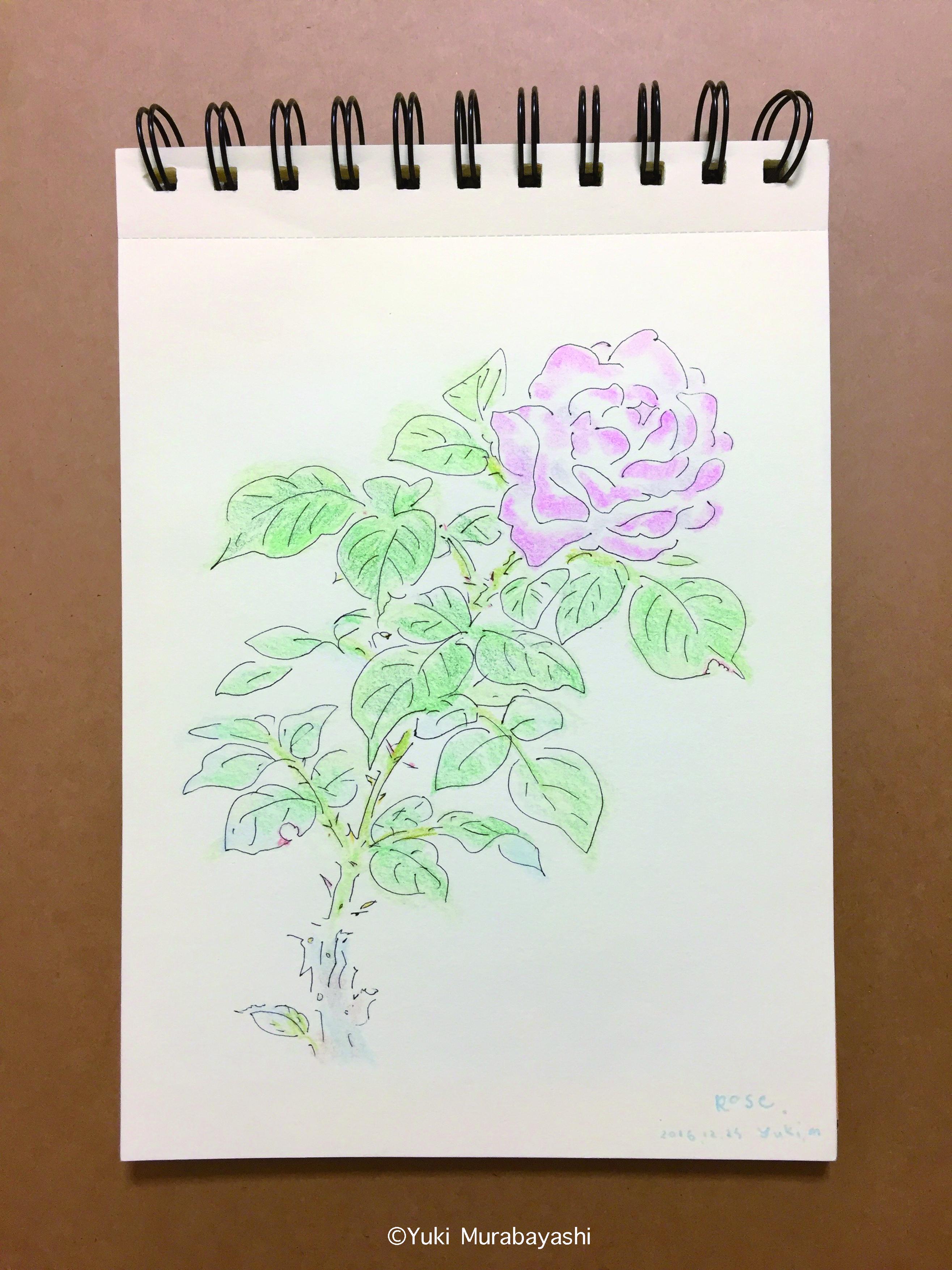 スケッチ1_薔薇