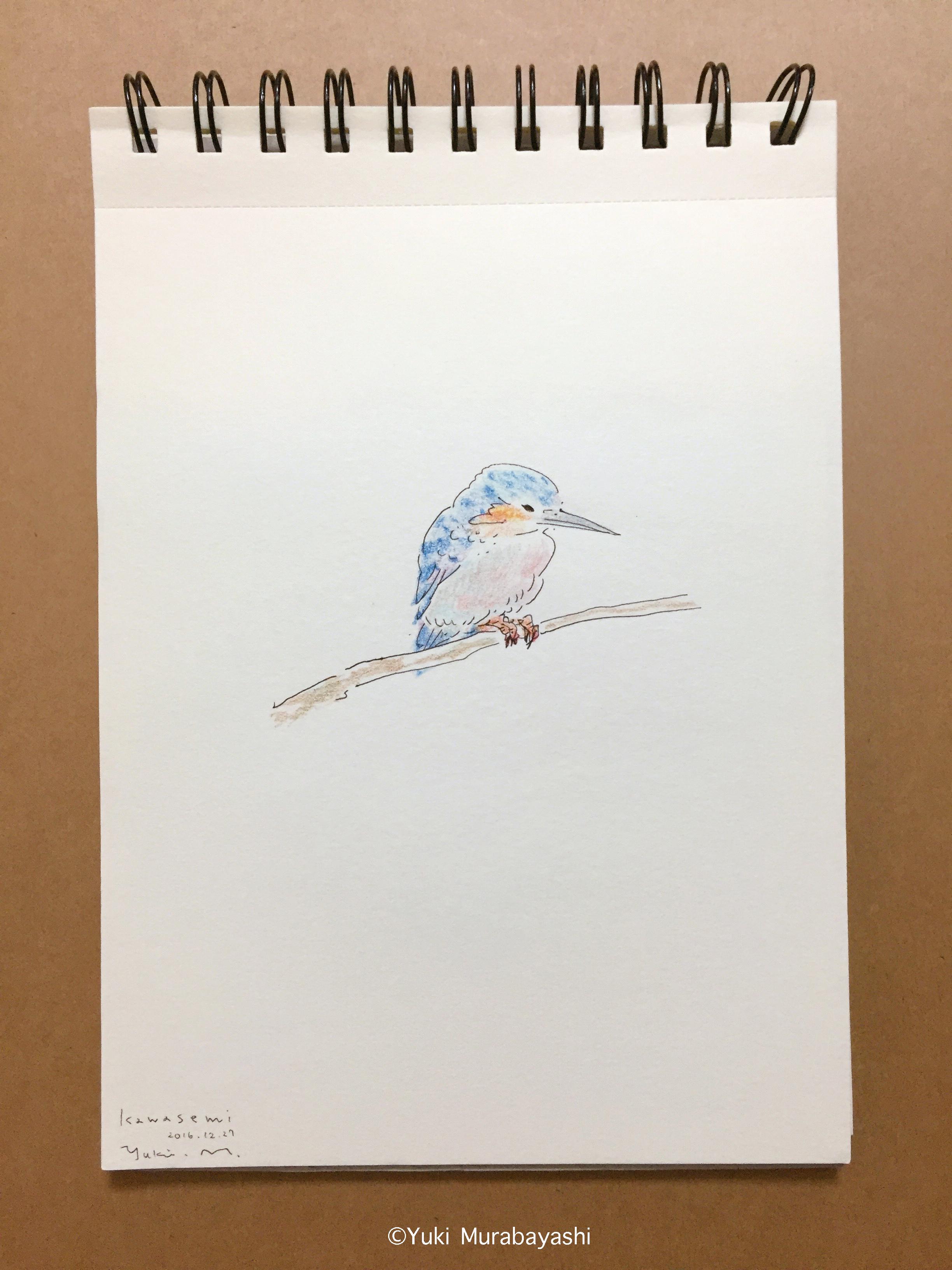 スケッチ5_カワセミ